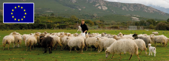Pac les aides en conomie corse - Chambre agriculture haute corse ...