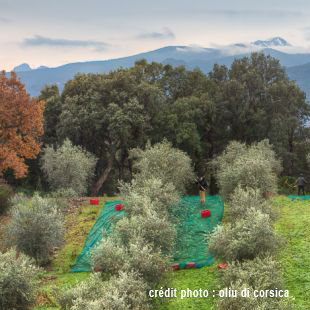 Corse chambres d 39 agriculture - Chambre d agriculture des hautes alpes ...